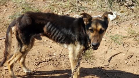 Due cani abbandonati, uno denutrito: l'Enpa li sequestra e denuncia … – Lecceprima.it
