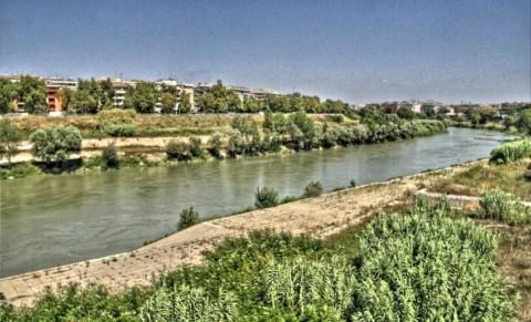 Roma, Pescatore avvista coccodrillo nel Tevere ed è subito psicosi – Romait