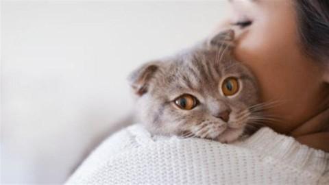 Dimmi che segno sei e ti dirò l'animale domestico giusto per te – Leggo.it