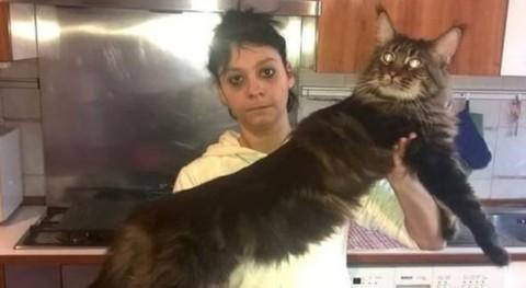 Il gatto più lungo del mondo è italiano e si chiama Barivel – Il Messaggero