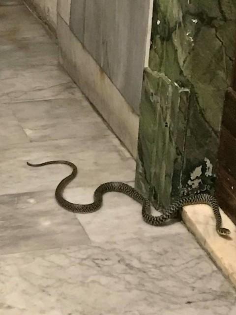Ho trovato un serpente sul mio pianerottolo di casa nel centro … – TPI