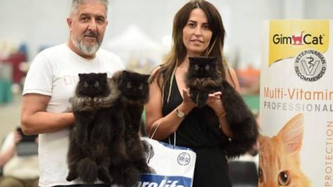 Il gatto più bello d'Italia è di Imperia – La Riviera