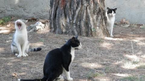 """""""Via i gatti dalla scuola"""", l'ordinanza del sindaco dopo l'ispezione … – Versiliatoday.it"""