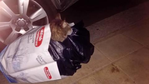 Sente alcuni lamenti per strada e scopre due gatti infilati dentro una … – Lecceprima.it