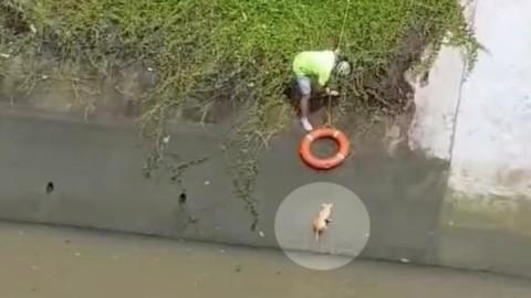 Passante usa un salvagente salva un gatto che rischia di annegare – La Stampa