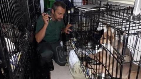 VIDEO: quaranta cuccioli di cane e gatti stipati in gabbie dentro un … – AltaRimini