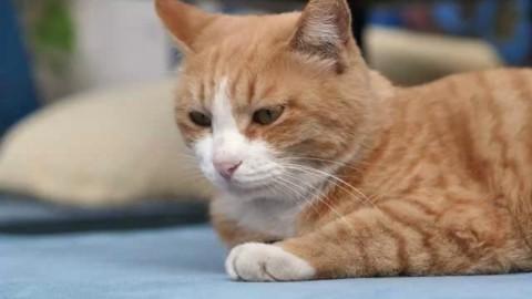 """Nuova Zelanda, il paese vietato ai gatti. """"Per proteggere la … – La Repubblica"""