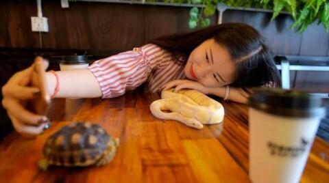 Dopo i cat café, ecco il bar con serpenti e lucertole – Quotidiano.net