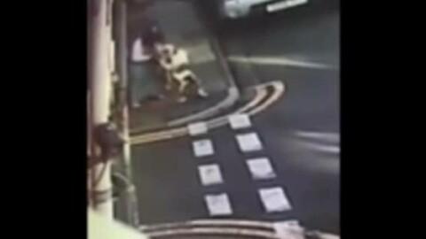 Drammatico : pitbull attacca il cane e la sua padrona – Gazzetta di Parma