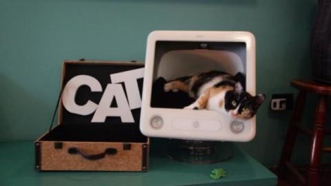Happy Together. Vivere felici con il proprio gatto, ciclo di incontri … – mentelocale.it