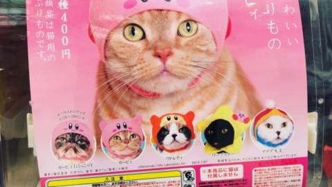 Come trasformare il tuo gatto in Kirby – GameCompass