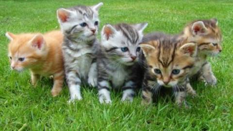 I gatti hanno un grande potere curativo: arriva la conferma degli … – Fidelity News