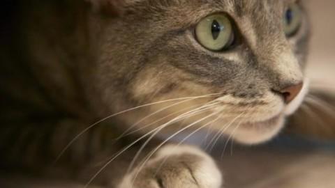 """Il gatto porta a casa un sacchetto pieno di droga: """"Meglio dei cani … – Fidelity News"""