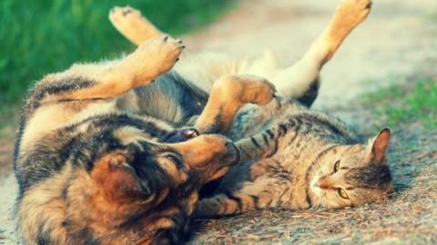Cani e gatti, l'esperto: «Ciò che piace a noi, forse non piace a loro» – Corriere della Sera