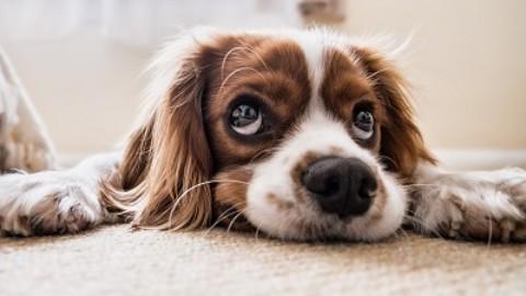 Gravidanza isterica nei cani: cause, sintomi e come curarla – MarsalaOggi.it