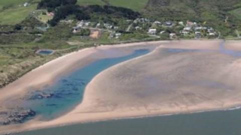 Gatti indesiderati a Omaui: in nuova Zelanda rischio biodiversità – AmbienteAmbienti