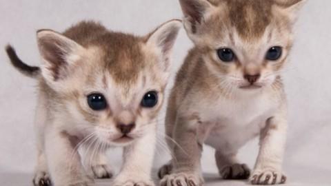 530 gatti in mostra alle Fiere. La razza più piccola al mondo e il … – Next Stop Reggio (Satira) (Comunicati Stampa)