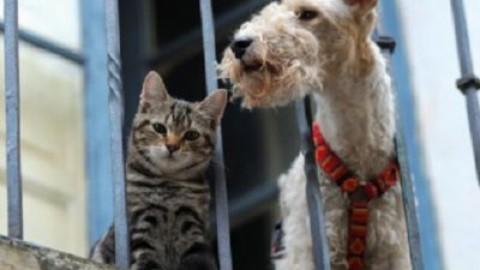 Animali in condominio, Cassazione: responsabilità di chi detiene il … – www.amoreaquattrozampe.it (Blog)