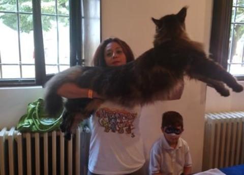Barivel, il gatto più lungo del mondo, star del Festival dei Gatti. FOTO – Affaritaliani.it