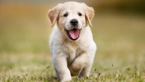 L' assicurazione per gli animali domestici – Radiogold