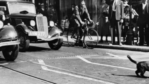 Gatto attraversa strada e auto si ribalta: al volante una suora – Automoto.it