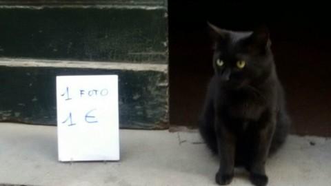 """Brinchio, il """"gatto di Rugapiana"""" diventa star della Tv giapponese – ValdichianaOggi.it (Satira) (Comunicati Stampa) (Blog)"""