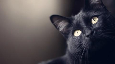 Inghilterra: un gatto trova una busta con stupefacenti, la polizia lo … – Blasting News