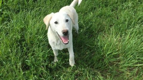 Appello per un'area cani a Vicchio. Lettera di una lettrice – OK!Mugello. Notizie cronaca attualità (Comunicati Stampa)