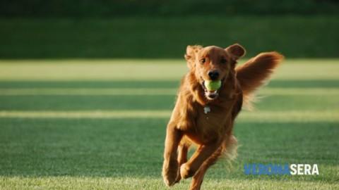 Nuovo corso di relazione con il cane del Gruppo Cinofilo Verona … – Verona Sera