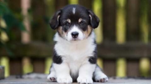 Cani in passerella a Cambiasca – Vco24 (Comunicati Stampa) (Blog)