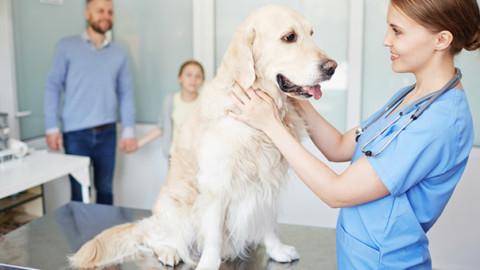 Cani e gatti malati: l'errore dei proprietari nel momento dell'addio – GreenStyle