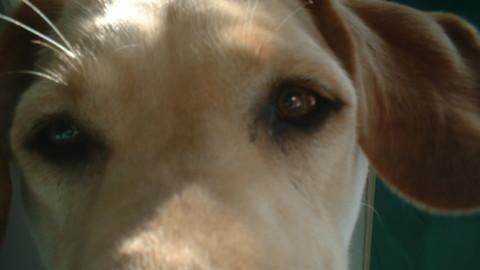San Severo, cane trovato morto alla periferia nord – StatoQuotidiano.it