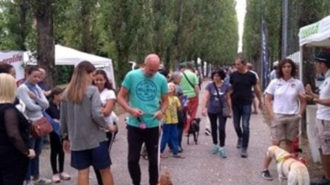 Rassegna cinofila: oltre 200 cani alla manifestazione per i 4 zampe … – VeneziaToday