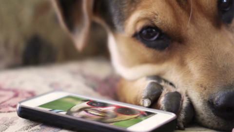 L'uso eccessivo dello smartphone potrebbe danneggiare il tuo cane – Infinity News (Blog)