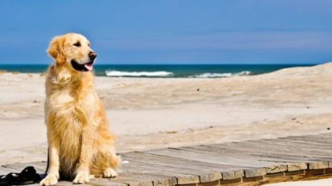 AIDAA: 9mila multe per i cani in spiaggia, fioccano i ricorsi – Meteo Web
