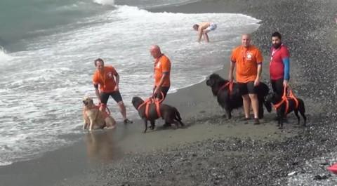 "Cogoleto, la ""Passeggiata Bau Bau"" con i cani soccorritori – Shippingonline"