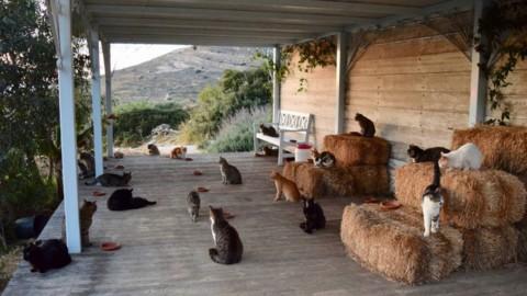 In 35.000 per un posto in un rifugio per gatti sull'isola di Syros in … – Mi-Lorenteggio