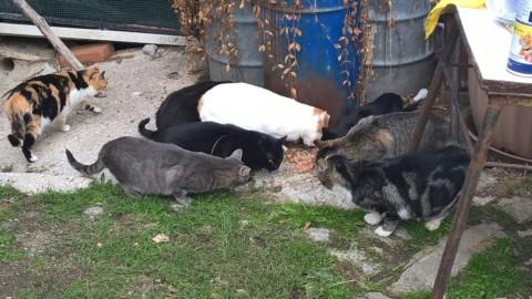 """Leidaa Ascoli: """"Sosteniamo cani e gatti rimasti soli dopo il sisma … – Piceno Oggi"""