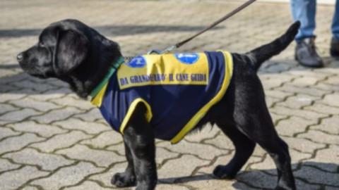 Fira di Sett Dulur. Arriva la scuola dei cani guida per non vedenti … – Lugonotizie.it