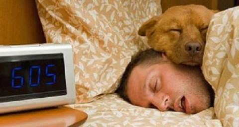 Dormire con gli animali: proprietari di cani e gatti perdono ore di sonno – www.amoreaquattrozampe.it (Blog)