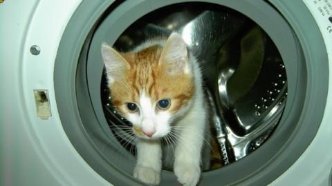 Ho smarrito il gatto: ecco dove cercarlo – tio.ch