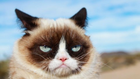 Questo gatto non è arrabbiato – tio.ch