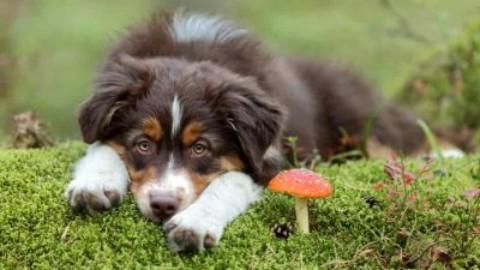 Funghi velenosi attenzione a cani e gatti – www.amoreaquattrozampe.it (Blog)