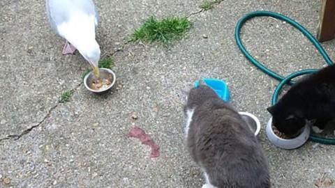 Storie di gatti e gabbiani: gli animali all'esterno del Condominio 2.0 – TRIESTEALLNEWS