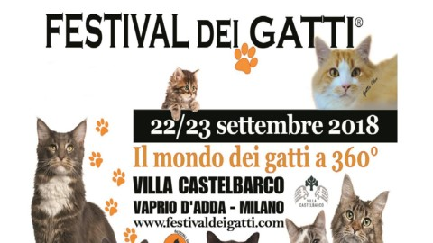 Festival dei gatti a Vaprio d'Adda – La Martesana