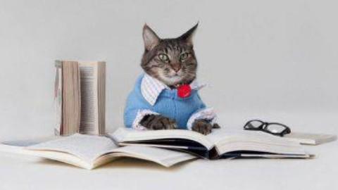 Il gatto piu intelligente del mondo – www.amoreaquattrozampe.it (Blog)