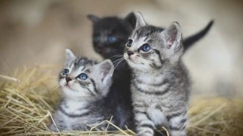 Gatti vietati in un paese della Nuova Zelanda per proteggere la … – Scienze Fanpage