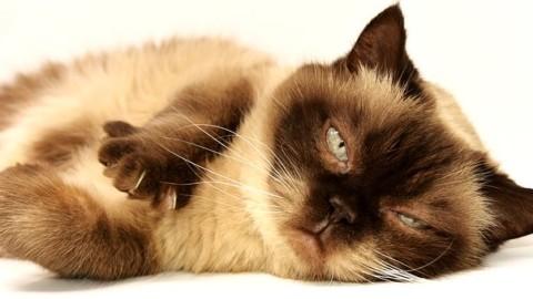 10 imperdibili curiosità sui gatti! – Moondo (Blog)
