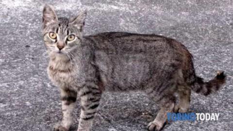 Gatto (obeso) cade dall'ottavo piano in testa a un passante … – TorinoToday