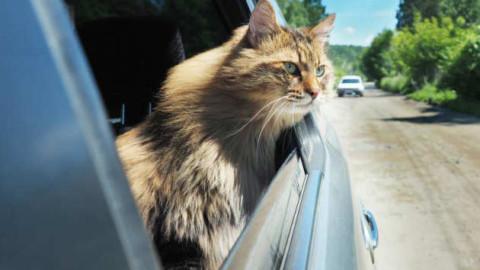 Come portare il proprio gatto in vacanza – Corriere Salentino